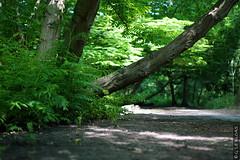 DSC01076 (g.lebloas) Tags: forêt bois arbre eau