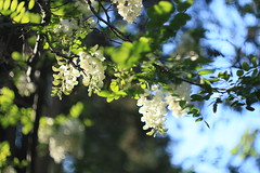 IMG_8562 (martaadves) Tags: people girls nature crimea sevastopol green flowers