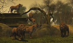 Kings and Queens (Loegan Magic) Tags: secondlife islandoftrust lions jungle rocks trees sky grass wildlife