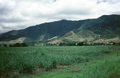 Sugar Cane Fields (Serendigity) Tags: australia fields hills farm redlynch cairns sugarcane queensland