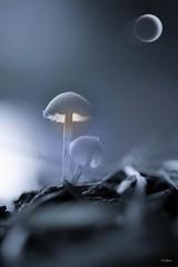 Eclipse... (mars-chri) Tags: champignons étangs forêt prairie valdoise