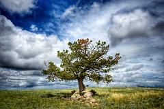 High Plains Ponderosa (CTfotomagik) Tags: rocks landscape grass field sky nikon wyoming clouds tree ponderosa pine evergreen ctfotomagik laramiecounty countryside country