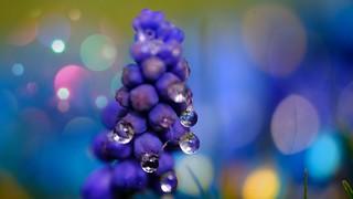 Droplets - 5432