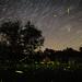 Intermediate Steps... (koperajoe) Tags: longexposure fireflies nightsky lightningbugs startrails