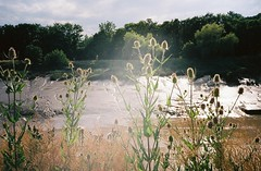 Teasels, lensflare (knautia) Tags: riveravon bristol england uk july 2018 film ishootfilm olympus xa2 olympusxa2 kodak kodacolor 200iso nxa2roll35 river avon mud lowtide teasel