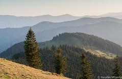 * (Yaroslav Mizernyi) Tags: carpathians nature mountains ukraine spring