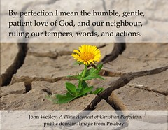 John Wesley's definition of Christian Perfection (Martin LaBar (going on hiatus)) Tags: poster johnwesley christian flower parched growth perfection