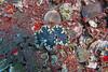 Clam 3 (Petter Thorden) Tags: diving indonesia gili trawangan underwater clam