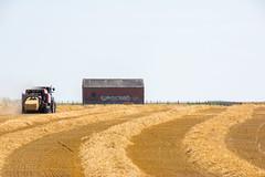Harvesting gold. (Azariel01) Tags: 2018 ittre belgique belgie belgium field champ paille straw herbe grass harvested harvest summer été récolte ballot bale tracteur tractor harvesting gold or poussière dirt sec dry agriculture bales