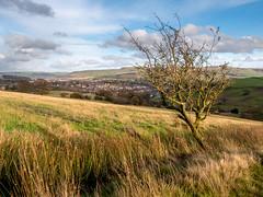 Musbury Valley (Matthew_Hartley) Tags: autumn fall musbury valley tree helmshore haslingden rossendale lancashire northwest england uk britain panasonic gx7 lumix 1232