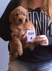 Lucy Lu Girl 4 pic 3 6-17