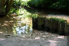 DSC01117 (g.lebloas) Tags: forêt bois arbre eau sable