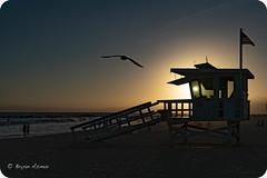 Venice Beach California LifeGuard Sunset (bryanasmar) Tags: venice beach california lifeguard sunset ngc seagull flag bird sun sony a7rii fe 2470 f f4 zeiss