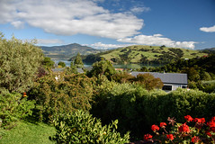 Going to be a Good Day (Jocey K) Tags: newzealand akaroa bankspeninsula nikond750 flowers garden trees plants sky clouds sea akaroaharbour houses