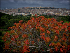 Cagliari (kurtwolf303) Tags: cagliari sardinien city stadt cityscape plants pflanzen himmel sky clouds wolken gebäude buildings landscape landschaft mft kurtwolf303 olympusem1 omd microfourthirds micro43 mirrorlesscamera sardigna sardegna blüten blühend blossoms