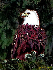 bald eagle sitting proud (Jill Rowland) Tags: wildlife eagle bird trees green usa alaska abstract abstractart manipulatedphoto