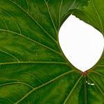 Leaf frame thumbnail