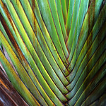 Palm (patterns)