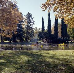 William Land Park Fountain 2 (Scott Micciche) Tags: hasselblad mediumformat kodak portra 400 sixbysix