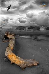 033 - El Tronc (EXPLORE Jul 15, 2018 #167) (Joanot Photography) Tags: deltebre baixebre catalunya 2006 joanot joanotbellver bw tronc àliga platja delta explore