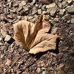 Shades of Fall thumbnail