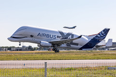 Airbus A330-743L Beluga XL (Rami Khanna-Prade) Tags: tls lfbo airbus blagnac toulouse france avgeek a330 a332 a330200 belugaxl a330743l a330bxl fwbxl aib a33b rollsroyce trent avgeeks stelia a337 msn1824 1stflight