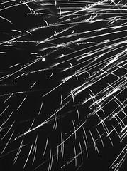 Marine Day Fireworks 2018 ③ (Jon-Fū, the写真machine) Tags: jonfu 2018 olympus omd em5markii em5ii em5mkii em5mk2 em5mark2 オリンパス mirrorless mirrorlesscamera microfourthirds micro43 m43 mft μft マイクロフォーサーズ ミラーレスカメラ darktable japan 日本 nihon nippon ジャパン ジパング japón जापान japão xapón asia アジア asian orient oriental aichi 愛知 愛知県 chubu chuubu 中部 中部地方 nagoya 名古屋 blackandwhite bw bnw monochrome monochromatic grayscale greyscale nocolor モノクロ モノクローム 白黒 黒白 longexposure longexposures 長時間露出 night nighttime 夜 evening 夜景 fireworks 花火 花火大会