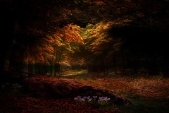 Magic forest ... (Julie Greg) Tags: fujifilmxt20 forest nature colours texture tree grass flowers england kent