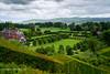 View from Powis Castle (Holfo) Tags: nationaltrust powiscastle wales landscape hills fields hedges nikon d750 grass tree