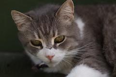 Mumma (sr667) Tags: cat cats bestofcats toronto on canada ca