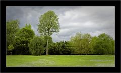Verte prairie (Jean-Louis DUMAS) Tags: nature paysage landscape landscapes dreams vert green arbre tree ciel sky cloud nuage pelouse champ forêt animal personnes sur la photo pairie