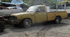 1976 Toyota HiLux #2 (occama) Tags: oaf285r toyota hilux 1976 old pickup car cornwall uk scrap japanese yellow rare