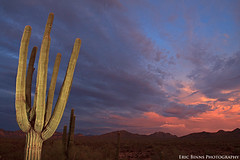Future Glow (Eric Binns Photography) Tags: sonorandesert desert southwest arizona outside outdoors strobist offcameraflash offcameralighting clouds sunset sky saguaro cactus landscape