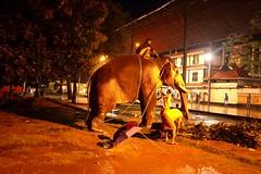 Street photography (Rajavelu1) Tags: elephant guruvaur kerala india streetphotography colourstreetphotography nightstreetlife streetscenes nightstreetphotography availablelight dslr handheld art creative artdigital candidstreetphotography highiso handheldnightphotography