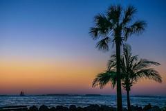 Tranquility (Saswati Sarthak Sahu) Tags: tree sunset sky ocean sea nature outdoor florida serene romantic coastal coast coastine boat landscape colorfullandscapes colorfulsky colors nikon