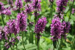 Cylburn Arboretum (karma (Karen)) Tags: baltimore maryland cylburnarboretum flowers dof bokeh cliche hcs cmwd topf25