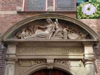 Cleanliness and Purity. Hygeia and the Laboratorium voor Hygiene, and Kalanchoè, University of Groningen, Groningen, The Netherlands