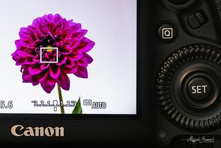Macro Mondays - Photography Gear