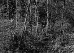 Coastal Maine Botanical Gardens (Richard Beech Mansfield) Tags: canoneosrebel2000 canonef50mmf18