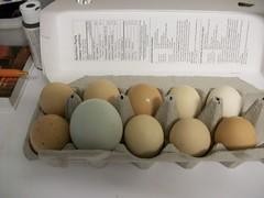 The Odd One. (geevee41) Tags: egg eggs largeegg summer prairies