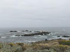 20180618_185842316_iOS (jimward85) Tags: pointlobos carmelbythesea montereybay california