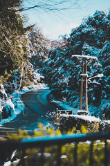 Bariloche, Río Negro, Argentina (Rocío Malatesta) Tags: bariloche argentina winter moody light snow white blue lake woods travel outside outdoor plane trekking mountain mountains family trees roads landscape art