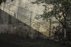 It's A Steep Climb (delmarvajim) Tags: digitalart digitalprocessing digitaleffects fineart texture drama light shadow tree wall