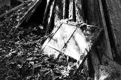 Window and Wood (bac1967) Tags: leicaiiif leicarangefinder leica leitz summitar leitzsummitar summitar5cmf2 summitarlens kodak kodaktrix kodakfilm kodaktrixfilm trix kodaktx tx kodaktrix400 film rodinal rodinal150 r09 londonoregon oregon pacificnorthwest pnw mine blackandwhite blackandwhitefilm blackwhite monochrome panchromatic panfilm bw monotone decay decayed decaying ruraldecay rural weathered rusty crusty crumbling rangefindercamera rangefinder window windows leaves boards