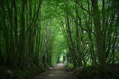 Jog along (annazelei) Tags: road forest tree trail wood path outdoor walking alone jogging trecking woods lights nature natural flora green track footpath pathway shadows timber greenwood naturaleza germany
