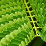 Kailua - Organic Pattern thumbnail