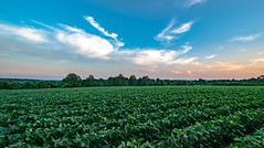 Soy Fields (Marty Bisson) Tags: farm rural country colors field canada ontario nature soy crops