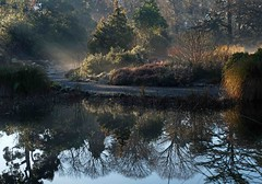 Mist and light on a frosty morning (Maureen Pierre) Tags: christchurchbotanicgardens christchurchnewzealand mist frost light rays beams trees early reflection tree sunlight gold