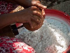 DSC_0392 (yakovina) Tags: silverseaexpeditions indonesia den weg island papua new guinea