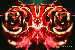 Dried Roses #abstract (Stephenie DeKouadio) Tags: abstractpainting abstractflower abstract abstractart abstractflowers art artistic hypnotique flowerspainting flowerpainting flowers flowersabstract flowerabstract flower macro macropainting macroabstract painting darkandlight red roses rose